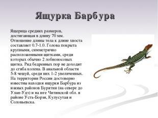 Ящурка Барбура Ящерица средних размеров, достигающая в длину 70 мм. Отношение дл