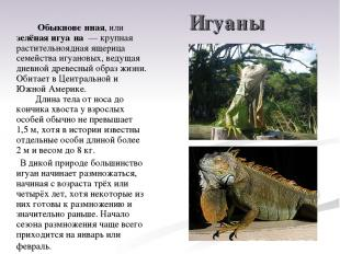 Игуаны Обыкнове нная, или зелёная игуа на — крупная растительноядная ящерица се
