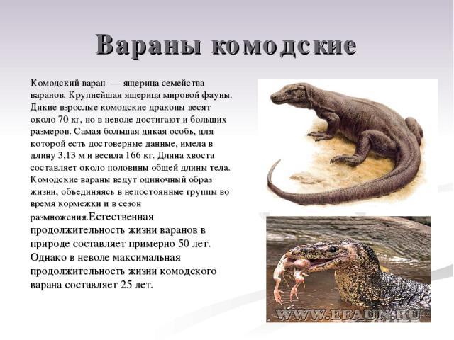 Вараны комодские Комодский варан — ящерица семейства варанов. Крупнейшая ящерица мировой фауны. Дикие взрослые комодские драконы весят около 70 кг, но в неволе достигают и больших размеров. Самая большая дикая особь, для которой есть достоверные дан…