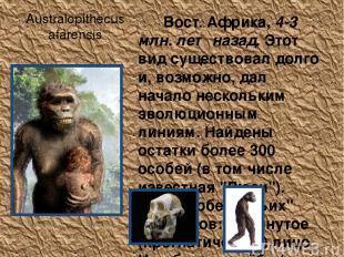 Australopithecus afarensis Вост. Африка, 4-3 млн. лет назад. Этот вид существова