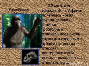 Paranthropus aethiopicus 2.7 млн. лет назад в Вост. Африке появилась новая груп