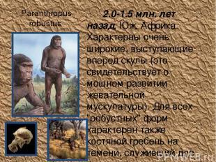Paranthropus robustus 2.0-1.5 млн. лет назад, Юж. Африка. Характерны очень широк
