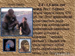 Homo habilis 2.4 - 1.5 млн. лет назад, Вост. Африка. Объем черепа около 670 куб.