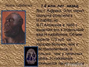 Homo rudolfensis 1.8 млн. лет назад, Вост. Африка. Этот череп сначала относили к