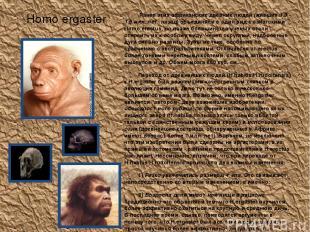 Homo ergaster Ранее этих африканских древних людей (живших 1.9 - 1.6 млн. лет на