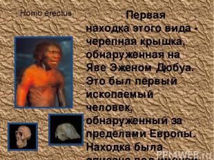 Homo erectus Первая находка этого вида - черепная крышка, обнаруженная на Яве Эж