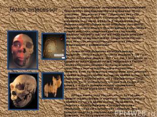 Homo antecessor Около миллиона лет назад африканские популяции Homo erectus эвол