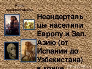 Homo neanderthalensis Неандертальцы населяли Европу и Зап. Азию (от Испании до У