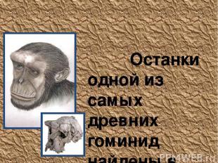 Sahelanthropus tchadensis Останки одной из самых древних гоминид найдены в пусты