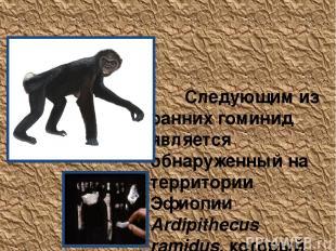 Ardipithecus ramidus Следующим из ранних гоминид является обнаруженный на террит