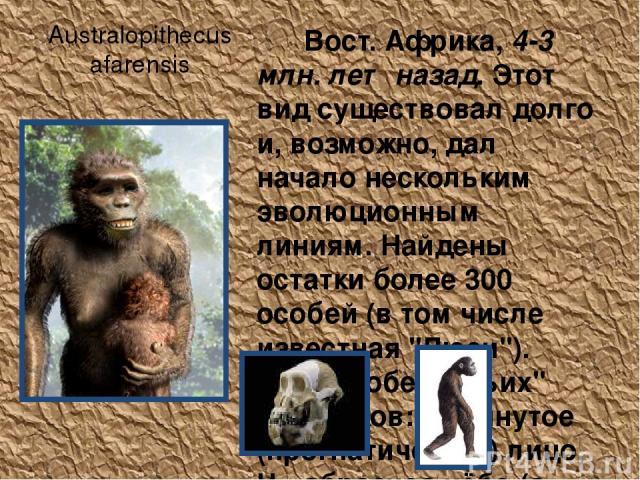Australopithecus afarensis Вост. Африка, 4-3 млн. лет назад. Этот вид существовал долго и, возможно, дал начало нескольким эволюционным линиям. Найдены остатки более 300 особей (в том числе известная