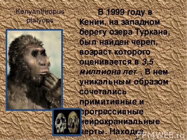 Kenyanthropus platyops В 1999 году в Кении, на западном берегу озера Туркана, был найден череп, возраст которого оценивается в 3,5 миллиона лет. В нем уникальным образом сочетались примитивные и прогрессивные нейрокраниальные черты. Находка является…