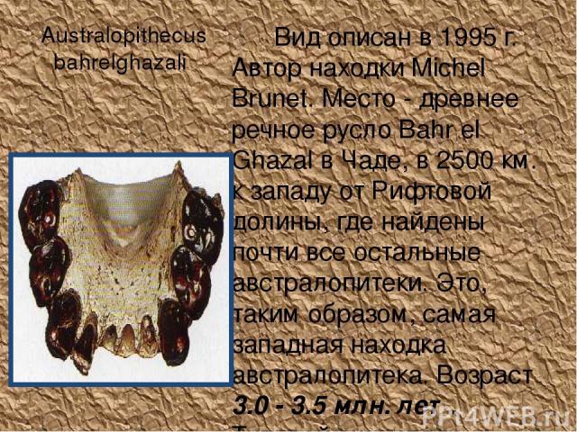 Australopithecus bahrelghazali Вид описан в 1995 г. Автор находки Michel Brunet. Место - древнее речное русло Bahr el Ghazal в Чаде, в 2500 км. к западу от Рифтовой долины, где найдены почти все остальные австралопитеки. Это, таким образом, самая за…