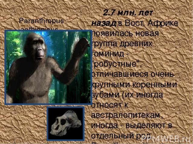 Paranthropus aethiopicus 2.7 млн. лет назад в Вост. Африке появилась новая группа древних гоминид -