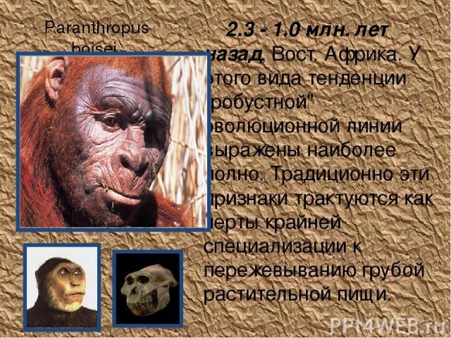 Paranthropus boisei 2.3 - 1.0 млн. лет назад, Вост. Африка. У этого вида тенденции