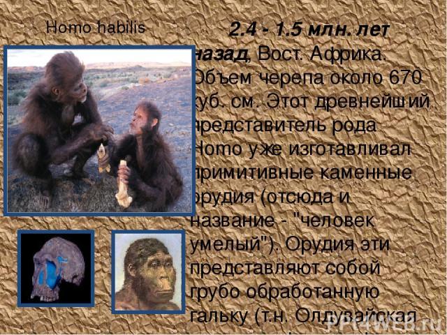 Homo habilis 2.4 - 1.5 млн. лет назад, Вост. Африка. Объем черепа около 670 куб. см. Этот древнейший представитель рода Homo уже изготавливал примитивные каменные орудия (отсюда и название -