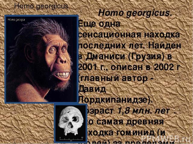 Homo georgicus Homo georgicus. Еще одна сенсационная находка последних лет. Найден в Дманиси (Грузия) в 2001 г., описан в 2002 г (главный автор - Давид Лордкипанидзе). Возраст 1,8 млн. лет. Это самая древняя находка гоминид (и людей) за пределами Аф…