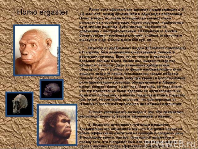 Homo ergaster Ранее этих африканских древних людей (живших 1.9 - 1.6 млн. лет назад) объединяли в один вид с азиатскими Homo erectus, но позже большинство ученых стали относить их к особому виду. Череп округлый, надбровные дуги сильно развиты. Зубы …