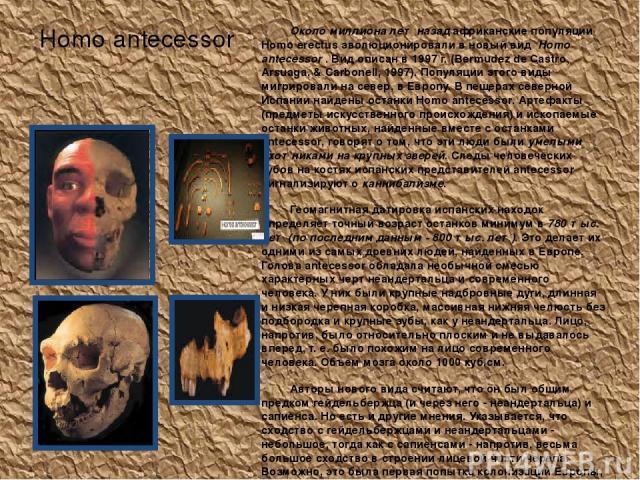 Homo antecessor Около миллиона лет назад африканские популяции Homo erectus эволюционировали в новый вид Homo antecessor . Вид описан в 1997 г. (Bermudez de Castro, Arsuaga, & Carbonell, 1997). Популяции этого виды мигрировали на север, в Европу. В…