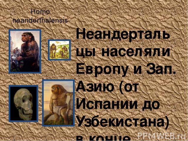 Homo neanderthalensis Неандертальцы населяли Европу и Зап. Азию (от Испании до Узбекистана) в конце плейстоцена (200 000 - 28 000 лет назад). Климат тогда был холоднее, и за время существования неандертальцев несколько раз наступали ледниковые эпохи…