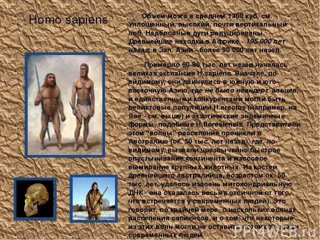 Homo sapiens Объем мозга в среднем 1300 куб. см. Уплощенный, высокий, почти вертикальный лоб. Надбровные дуги редуцированы. Древнейшие находки в Африке - 195 000 лет назад; в Зап. Азии - более 90 000 лет назад. Примерно 60-80 тыс. лет назад началась…