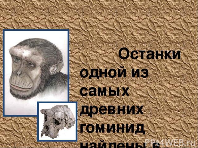 Sahelanthropus tchadensis Останки одной из самых древних гоминид найдены в пустынных землях северного Чада, недалеко от южного края Сахары. Превосходно сохранившийся череп, датируемый возрастом в 6–7 млн. лет, найден в 2001 г. в месте, называемом То…