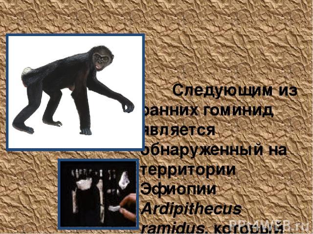 Ardipithecus ramidus Следующим из ранних гоминид является обнаруженный на территории Эфиопии Ardipithecus ramidus, который жил 4,4 миллиона лет назад (Woldegabriel, Haile-Selassie, Renne, Hart, Ambrose, Asfaw, Heiken & White, 2001; White, Suwa & Asf…