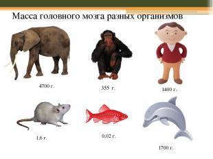Масса головного мозга разных организмов 4700 г. 355 г. 1400 г. 1,6 г. 1700 г. 0,