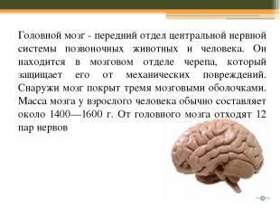 Головной мозг - передний отдел центральной нервной системы позвоночных животных