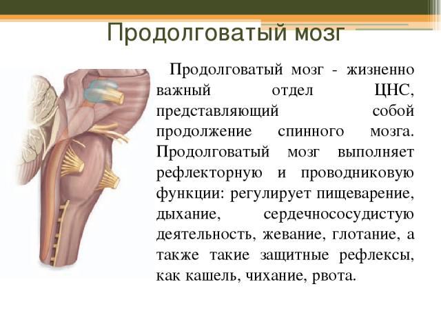 Продолговатый мозг Продолговатый мозг - жизненно важный отдел ЦНС, представляющий собой продолжение спинного мозга. Продолговатый мозг выполняет рефлекторную и проводниковую функции: регулирует пищеварение, дыхание, сердечнососудистую деятельность, …