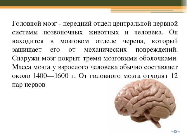 Головной мозг - передний отдел центральной нервной системы позвоночных животных и человека. Он находится в мозговом отделе черепа, который защищает его от механических повреждений. Снаружи мозг покрыт тремя мозговыми оболочками. Масса мозга у взросл…