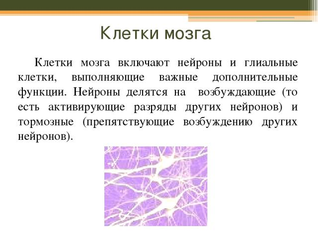 Клетки мозга Клетки мозга включают нейроны и глиальные клетки, выполняющие важные дополнительные функции. Нейроны делятся на возбуждающие (то есть активирующие разряды других нейронов) и тормозные (препятствующие возбуждению других нейронов).