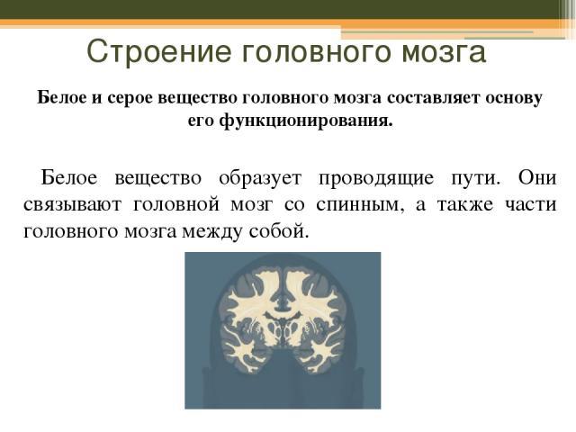 Строение головного мозга Белое и серое вещество головного мозга составляет основу его функционирования. Белое вещество образует проводящие пути. Они связывают головной мозг со спинным, а также части головного мозга между собой.