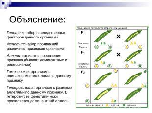 Объяснение: Генотип: набор наследственных факторов данного организма Фенотип: на