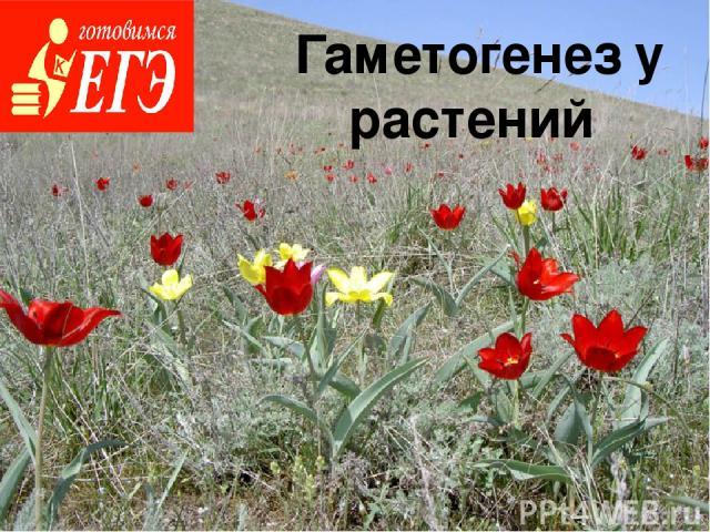 Гаметогенез у растений