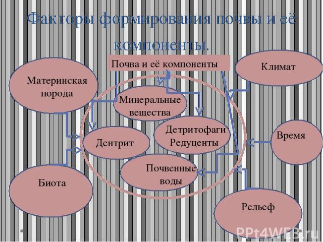 Факторы формирования почвы и её компоненты. Минеральные вещества Дентрит Почвенные воды Детритофаги Редуценты Почва и её компоненты Материнская порода Биота Рельеф Время Климат