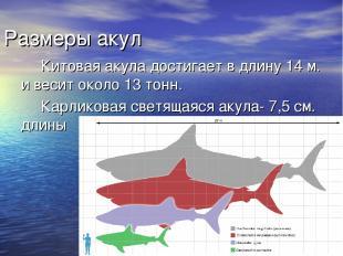 Размеры акул Китовая акула достигает в длину 14 м. и весит около 13 тонн. Карлик