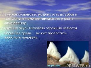 Огромное количество мощных острых зубов в пасти акулы помогает им хватать и рват