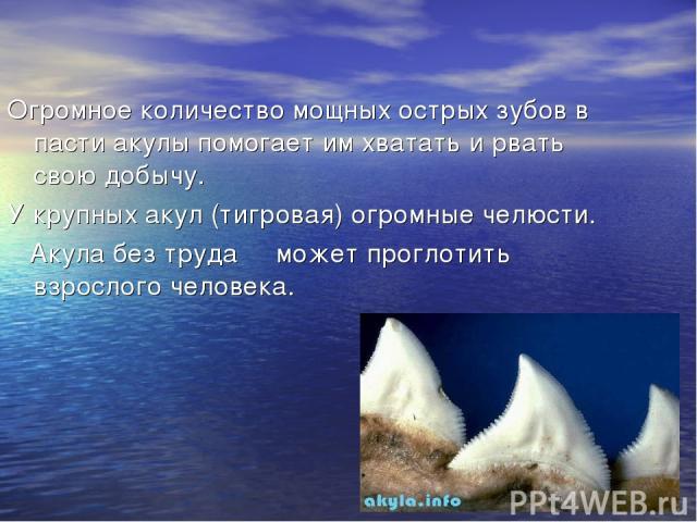 Огромное количество мощных острых зубов в пасти акулы помогает им хватать и рвать свою добычу. У крупных акул (тигровая) огромные челюсти. Акула без труда может проглотить взрослого человека.