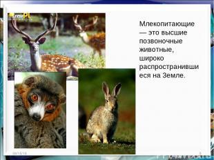 * * Млекопитающие — это высшие позвоночные животные, широко распространившиеся н
