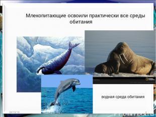 * * http://aida.ucoz.ru Млекопитающие освоили практически все среды обитания вод