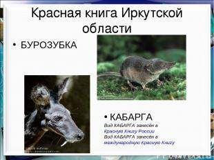 Красная книга Иркутской области БУРОЗУБКА КАБАРГА Вид КАБАРГА занесён в Красную
