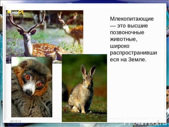 * * Млекопитающие — это высшие позвоночные животные, широко распространившиеся на 3емле.