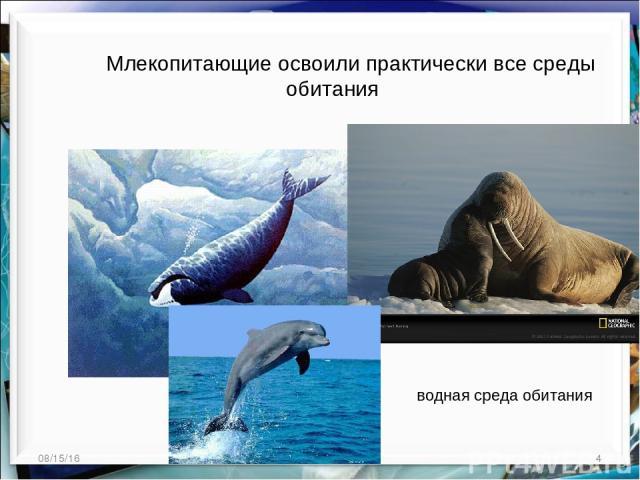 * * http://aida.ucoz.ru Млекопитающие освоили практически все среды обитания водная среда обитания