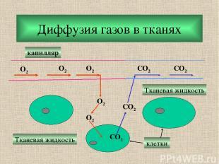 Диффузия газов в тканях O2 O2 O2 O2 O2 CO2 CO2 CO2 CO2 капилляр Тканевая жидкост