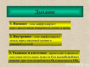Дыхание 1. Внешнее - газы диффундируют через дыхательную поверхность легких в кр