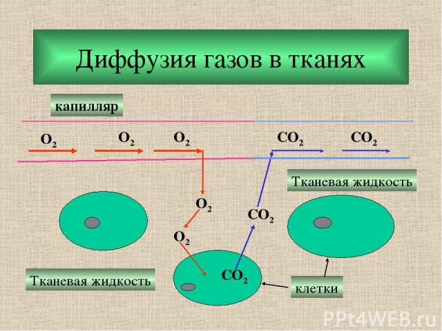 Диффузия газов в тканях O2 O2 O2 O2 O2 CO2 CO2 CO2 CO2 капилляр Тканевая жидкость Тканевая жидкость клетки
