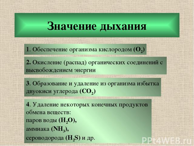 Значение дыхания 1. Обеспечение организма кислородом (О2) 2. Окисление (распад) органических соединений с высвобождением энергии 3. Образование и удаление из организма избытка двуокиси углерода (CO2) 4. Удаление некоторых конечных продуктов обмена в…