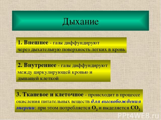 Дыхание 1. Внешнее - газы диффундируют через дыхательную поверхность легких в кровь 2. Внутреннее - газы диффундируют между циркулирующей кровью и дышащей клеткой 3. Тканевое и клеточное - происходит в процессе окисления питательных веществ для высв…