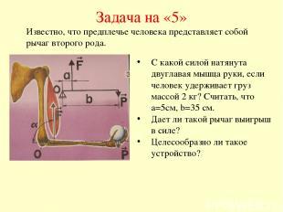 Задача на «5» С какой силой натянута двуглавая мышца руки, если человек удержива